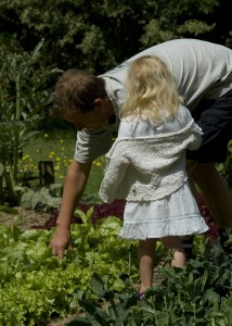 Rocket Gardens - Family Favourites Harvesting