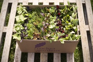 fresh plants in box